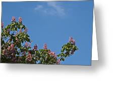 Horse Chestnut Greeting Card