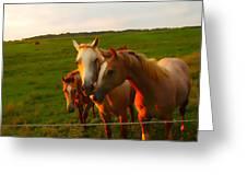 Horse Family Soft N Sweet Greeting Card