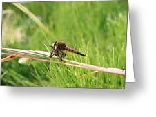 Horse Fly Close-up Greeting Card