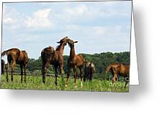 Horse Foul Play II Greeting Card