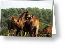 Horse Foul Play IIi Greeting Card