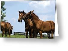 Horse Foul Play Vi Greeting Card