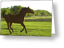 Horse Galloping Greeting Card