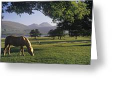 Horse Grazing On A Landscape Greeting Card