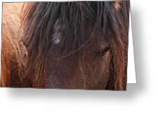 Horse Hair 2 Greeting Card
