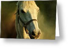 Horse Head Portriat Greeting Card