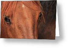 Horse Hide Greeting Card