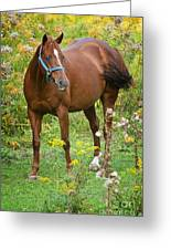 Horse In Field Greeting Card