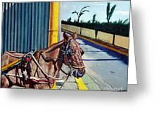 Horse In Malate Greeting Card