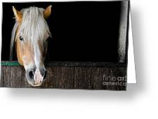 Horse In The Stable Greeting Card