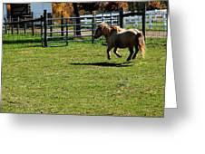 Horse Jump Greeting Card