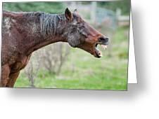 Horse Laugh Greeting Card