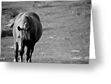 Horse Moves 10 Greeting Card