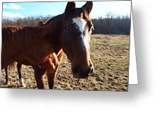 Horse Neck Greeting Card by Robert Margetts