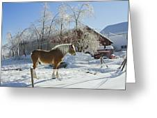 Horse On Maine Farm After Snow And Ice Storm Greeting Card
