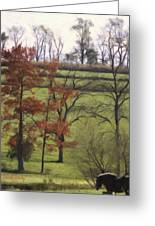 Horse On The Pasture Greeting Card
