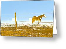 Horse Pasture Revblue Greeting Card