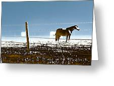 Horse Pasture Revdkblue Greeting Card