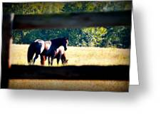 Horse Photography Greeting Card