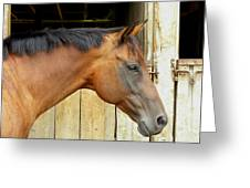 Horse Portrail Greeting Card