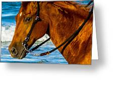 Horse Portrait  Greeting Card
