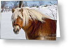 Horse Prince Greeting Card