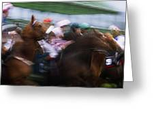 Horse Racing Horses Breaking From The Greeting Card