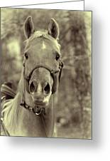 Horse Stare Greeting Card