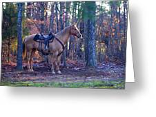 Horse Waiting For Rider Greeting Card