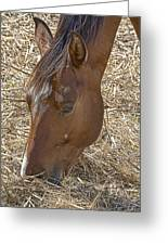 Horse With No Name Greeting Card