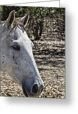 Horse With No Name V3 Greeting Card