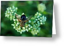 Horsefly No Bother Me Greeting Card
