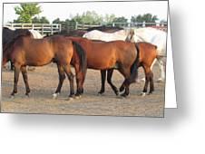 Horses-31 Greeting Card