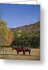 Horses And Autumn Landscape Greeting Card