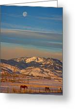 Horses And Moon Greeting Card