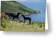 Horses By The Sea Greeting Card