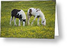 Horses Grazing, County Tyrone, Ireland Greeting Card