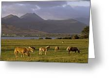 Horses Grazing, Macgillycuddys Reeks Greeting Card
