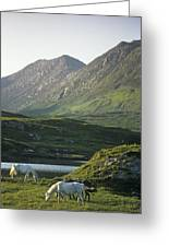 Horses Grazing On A Landscape, County Greeting Card by The Irish Image Collection