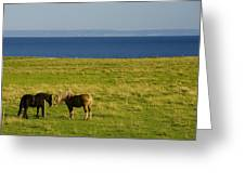 Horses In A Field, Guernsey Cove Greeting Card
