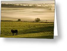 Horses In The Morning Mist, North Greeting Card