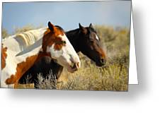 Horses In The Wild Greeting Card