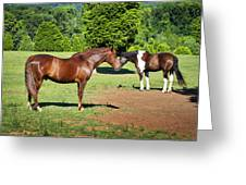 Horses Of A Different Color Greeting Card