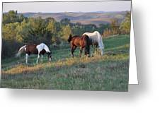 Horses On The Range Greeting Card