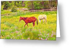 Horses Paradise Greeting Card
