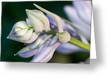Hosta Blossoms Greeting Card