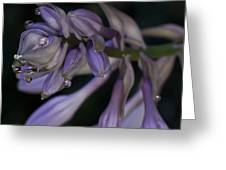 Hosta Blossoms With Dew Drops 6 Greeting Card