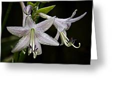 Hosta Front And Center Greeting Card by Michael Putnam