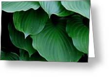 Hosta Green Greeting Card