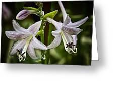 Hosta Makes Three Greeting Card by Michael Putnam